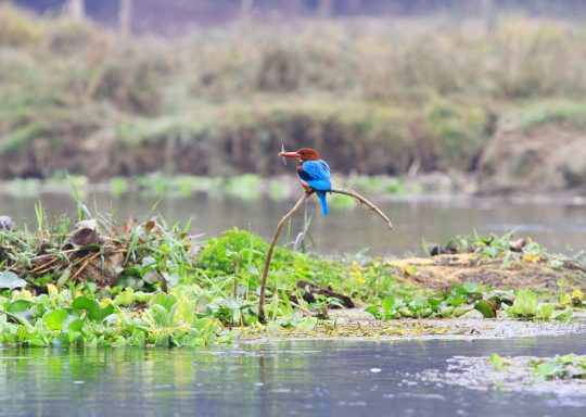 bird-watching-in-chitwan-national-park