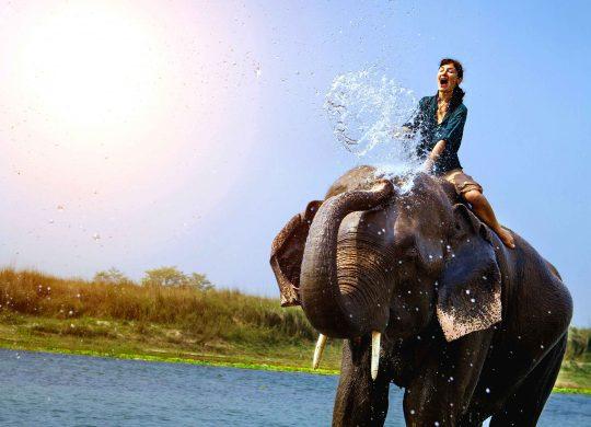 elephant-ride